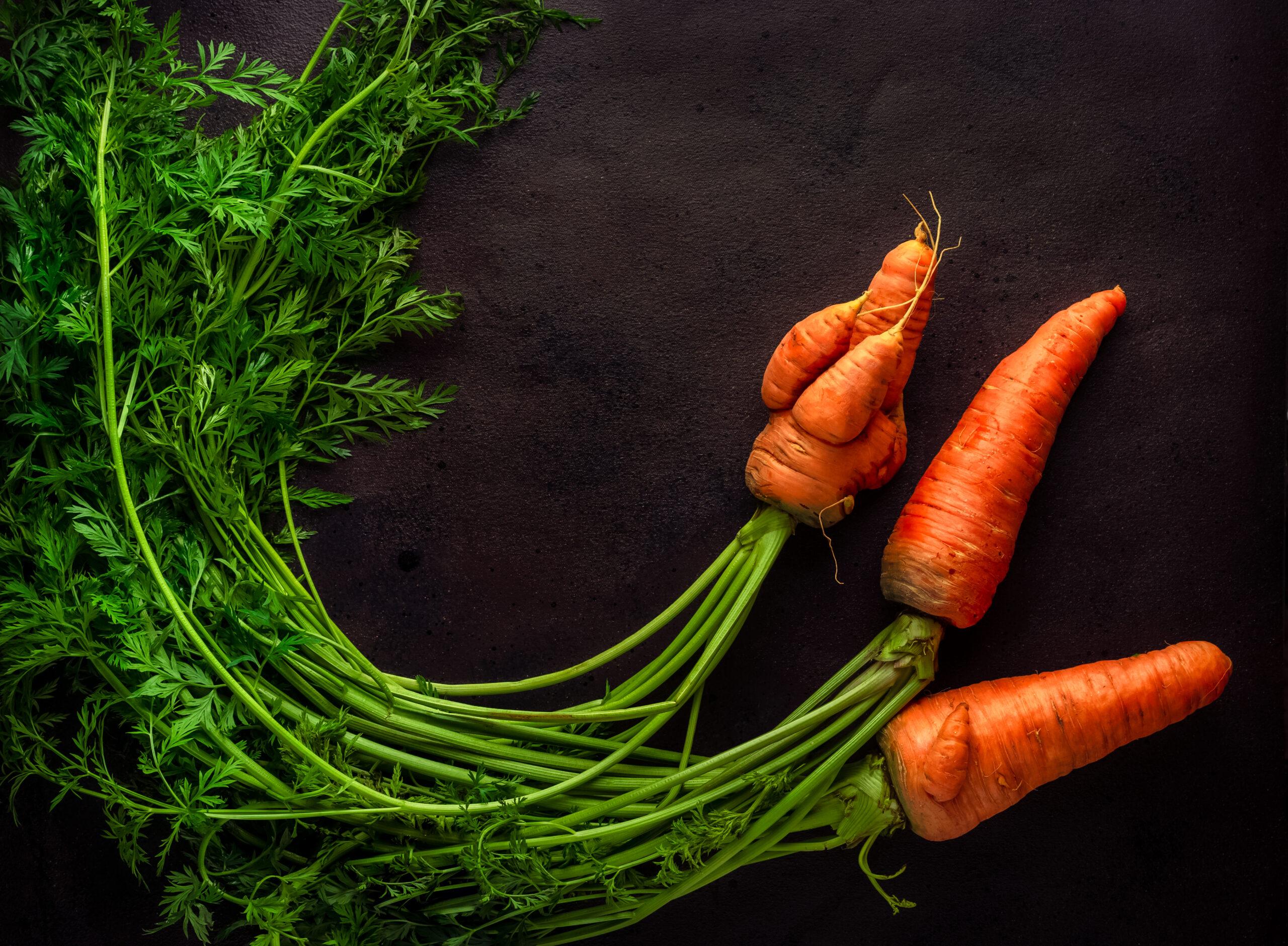 carotte moche